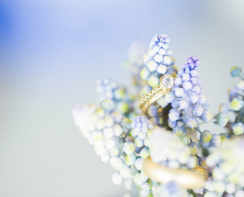 Shooting Cornflower Detail mit Ringen